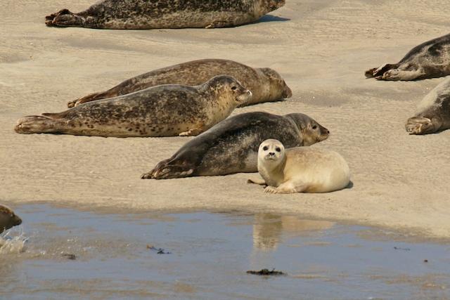 Robben-Baby auf Sandbank
